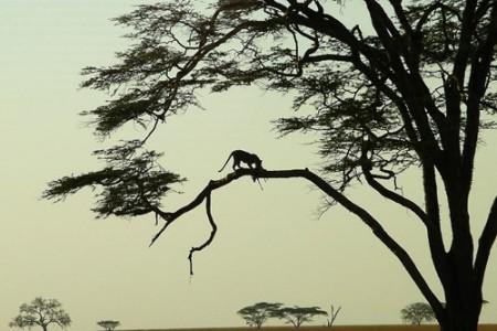 Fotografiando la vida salvaje