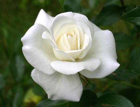 Profile  yessy muaks Foto-rosa-white