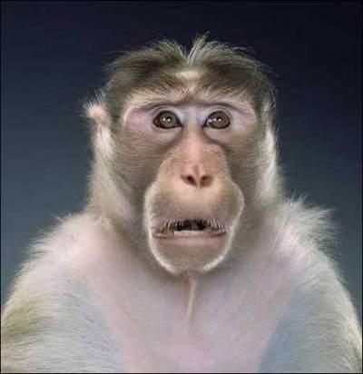Monos modelos