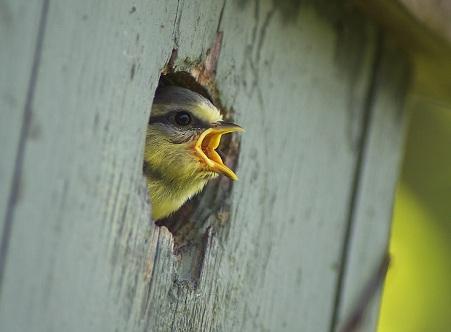 Fotos curiosas de aves