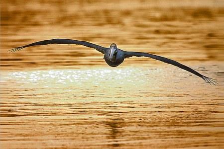 Aves en vuelo