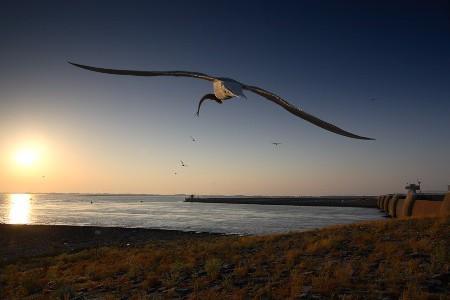 Fotos de aves en vuelo, respirando libertad