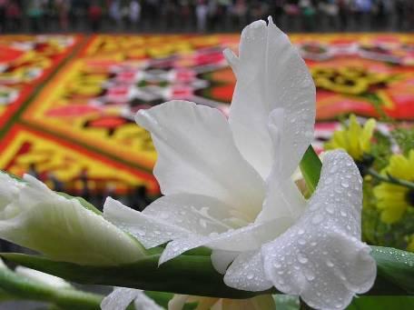 Detalle alfombra flores Bruselas