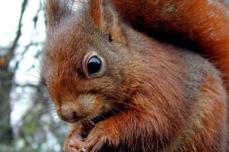 Fotos de ardillas, simpaticos roedores