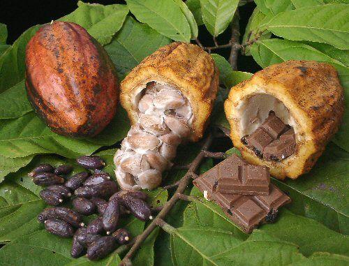 Cacao para chocolate