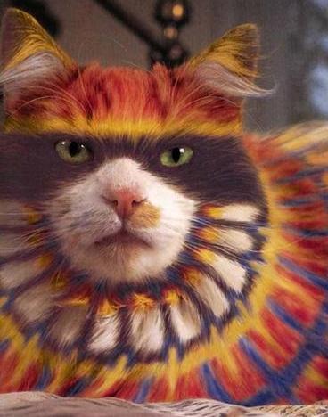 Pintar un gato