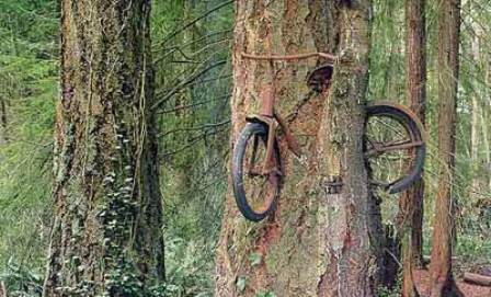 Bicicleta olvidada