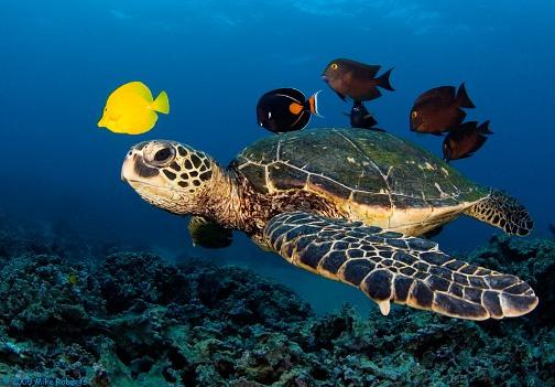 Reunión bajo el mar, por Mike Roberts