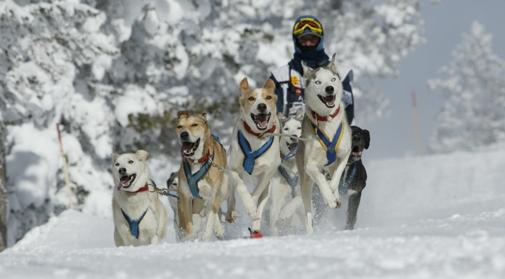 Pirena, perros en la nieve