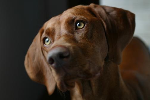 Foto de mirada de perro