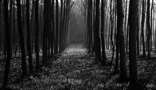 El bosque de Gustavo Campos