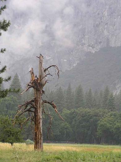 Yosemte 3