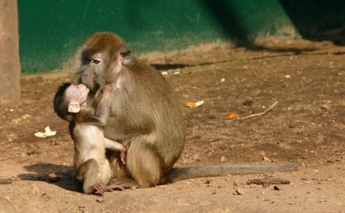 Fotos de amor de madre