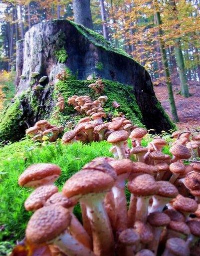Camino de hongos