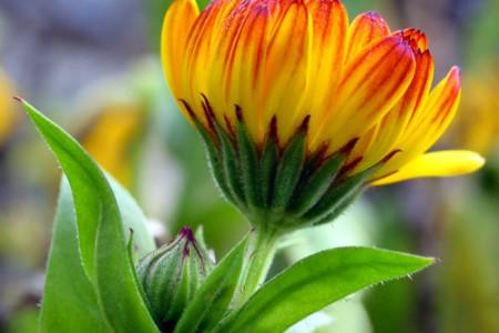 Flores de colores, fotos para disfrutar