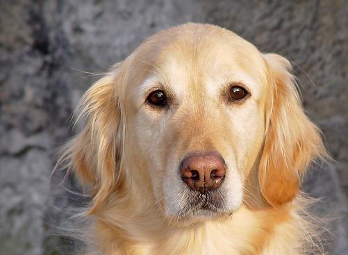 [Recomendado] La Eterna Fidelidad Canina