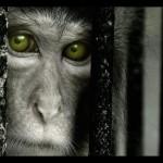 Fotos de animales: miradas