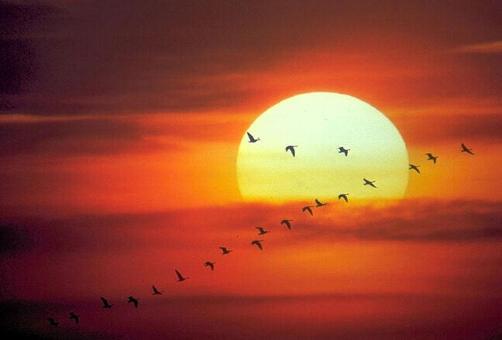 fotos de sol