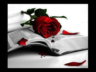 Rosa brillante, flor de terciopelo