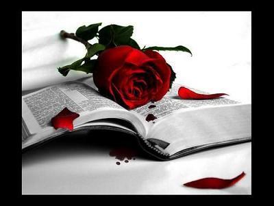 rosa en el libro
