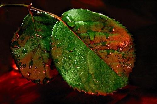 Rocio en hojas verdes
