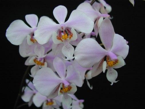 Preciosas Orquideas