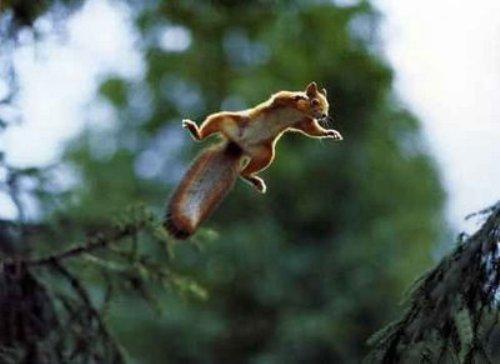 Saltando por la vida, fotos de animales | SobreFotos