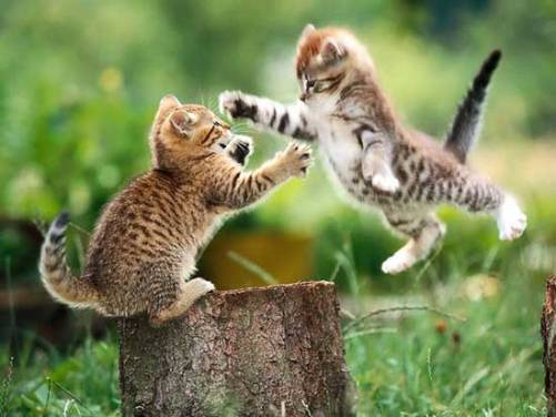 Fotos de gatos saltando y jugando