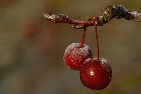 Belleza escarchada, fotos en invierno