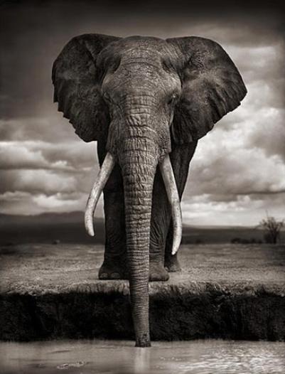 Elefante bebiendo