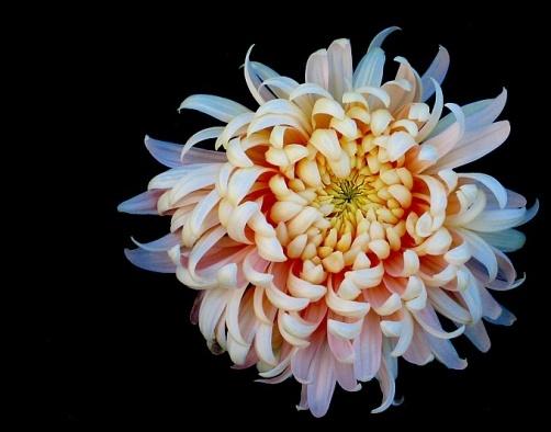 Flor sobre fondo negro