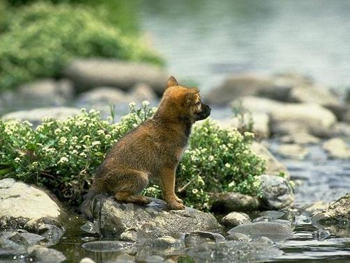 Perrito busca mamá