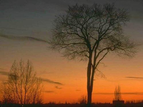 Fotos de árboles, simplemente