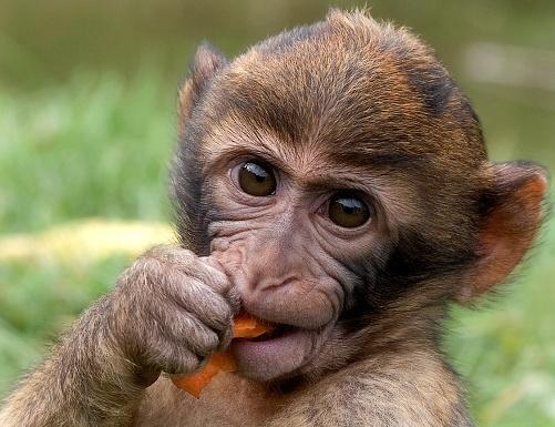 Mono bambino