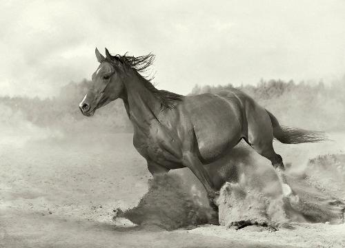 Foto de caballo