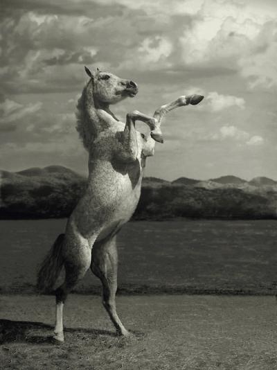 tatuaje de caballos. Foto de caballo. Indomable…