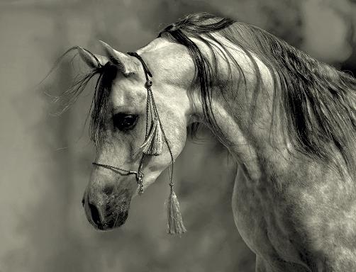 cabeza-de-caballo
