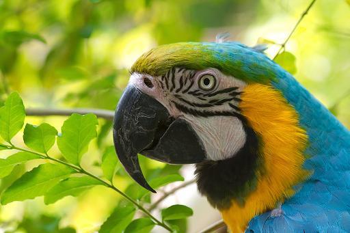 Fotos de loros, imagenes en colores