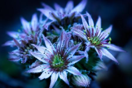 Fotos de explosivos colores florales