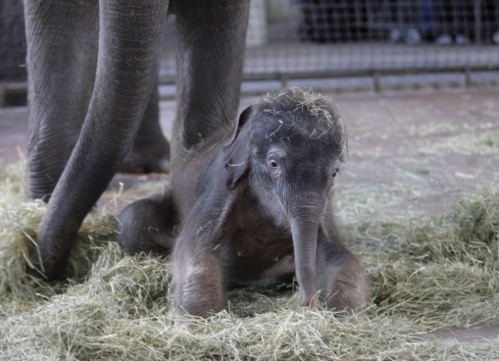 Fotos de un elefante bebé
