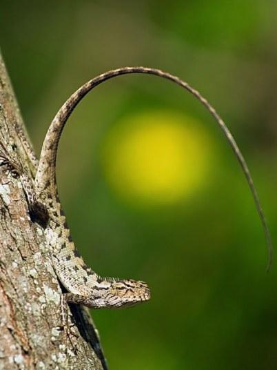 belleza en lagarto