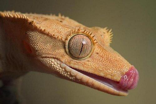 Primer plano de reptil