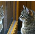 Los ojos de un gato