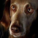 Caras de perro, fotos que muestran sentimientos