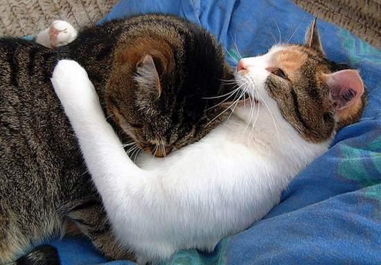 Abrazo de gatos