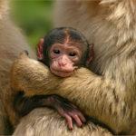 Fotos de animales: Amor animal