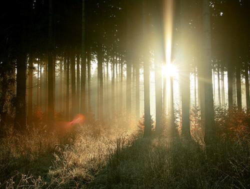 Atardece en el bosque