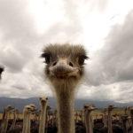 Fotos curiosas de animales del mundo