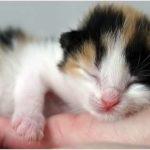 Fotos de gatos, ternura felina
