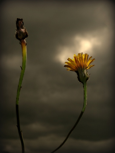 Flor y nubes